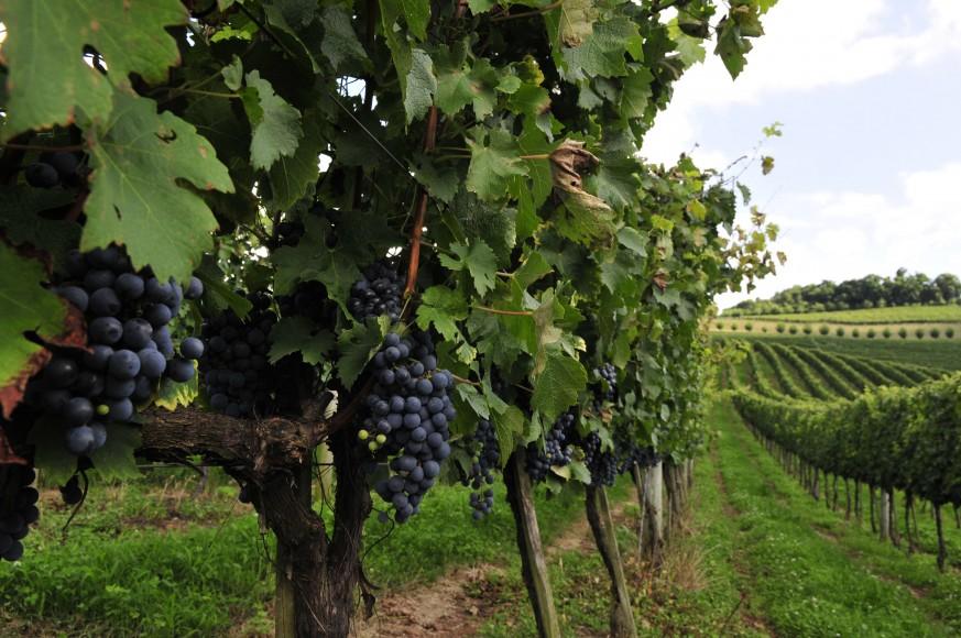 Revista inglesa Decanter estuda mercado brasileiro de vinhos