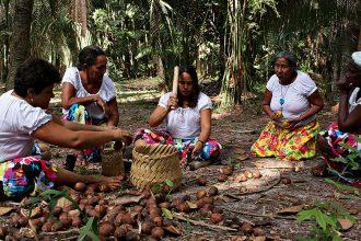 Quebradeiras de coco babaçu representam uma das práticas culinárias nacionais que têm as mulheres como suas guardiãs (fotos: divulgação)