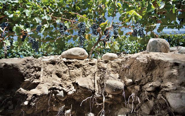 Calicatas permitem entendem o comportamento das raízes das vinhas
