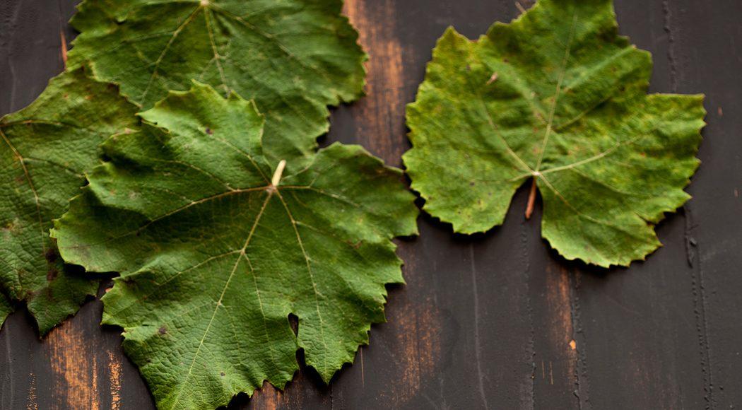 Versátil, a folha de uva pode ser utilizada em diversos preparos (foto: Sheila Oliveira/ Empório Fotográfico; produção: Melissa Thomé)