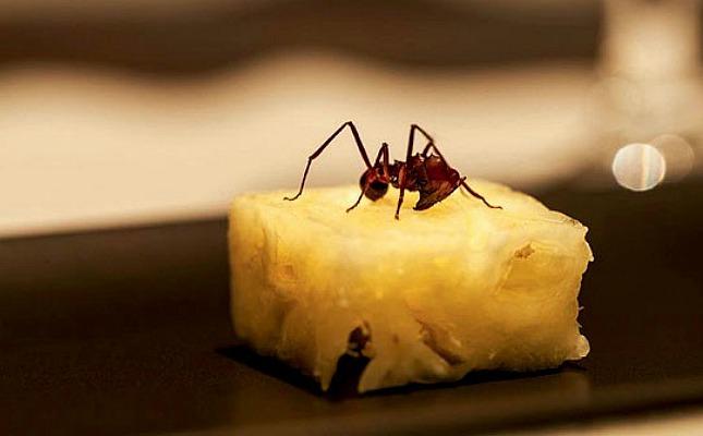 obremesa do D.O.M. une abacaxi com formiga amazônica. Crédito: Divulgação/Restaurante D.O.M.