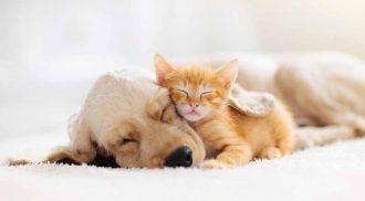 Pimenta e oreo estão entre os nomes mais usados para dar nome aos pets (Foto: Reprodução/iStock)